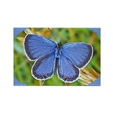 Eastern Tailed Blue Butterfly, Ca Rectangle Magnet