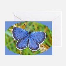 Eastern Tailed Blue Butterfly, Calen Greeting Card