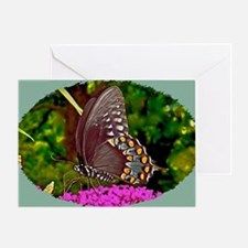 Eastern Black Swallowtail Butterfly, Greeting Card