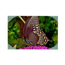 Eastern Black Swallowtail Butterf Rectangle Magnet