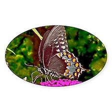 Eastern Black Swallowtail Butterfly Decal