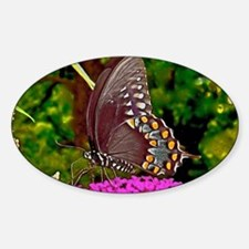 Eastern Black Swallowtail Butterfly Decal