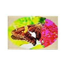 Silver-spotted Skipper Butterfly, Rectangle Magnet