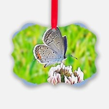 Eastern Tailed Blue Butterfly, Ca Ornament
