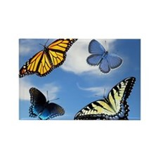 Assorted Butterflies Year At A Gl Rectangle Magnet