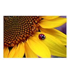 Ladybug on Sunflower Peta Postcards (Package of 8)