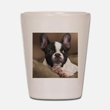 F pup panel print Shot Glass