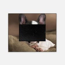 F pup panel print Picture Frame