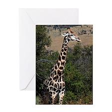giraffe2 Greeting Card