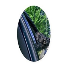 front Oval Car Magnet