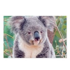 Koala Smile note Postcards (Package of 8)