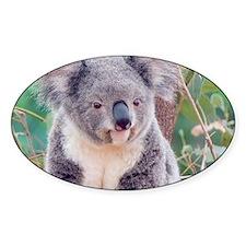 Koala Smile L print Decal