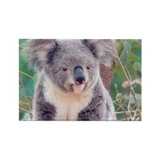 Koala Smile L print Rectangle Magnet