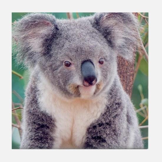 Koala Smile pillow Tile Coaster