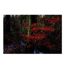 woodland_stream Postcards (Package of 8)