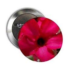 """pink_lily_mpad 2.25"""" Button"""