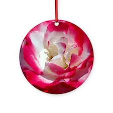 dk_pink_rose_panel Round Ornament