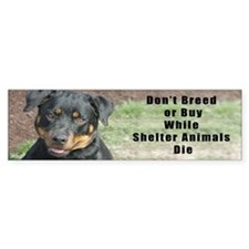 Shelter Animals Bumper Bumper Sticker