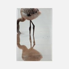 Baby Flamingo Galapagos Rectangle Magnet