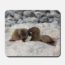 Baby Sea Lions Galapagos Mousepad
