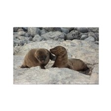 Baby Sea Lions Galapagos Rectangle Magnet
