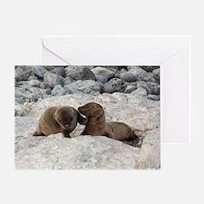 Baby Sea Lions Galapagos Greeting Card