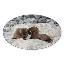 Baby Sea Lions Galapagos Decal