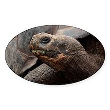 Tortoise Galapagos Decal