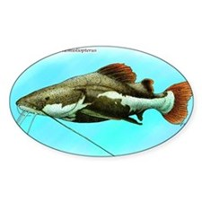 Red-Tailed Catfish Decal