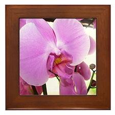 Orchid (14) Framed Tile