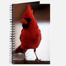 cardinal_443 Journal