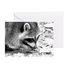 RacoonA14x10 Greeting Card