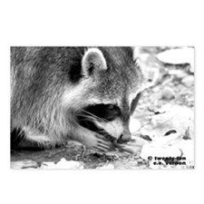 RacoonA14x10 Postcards (Package of 8)