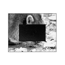 RacoonA14x10 Picture Frame