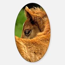 fuzzybaby_lgp Sticker (Oval)
