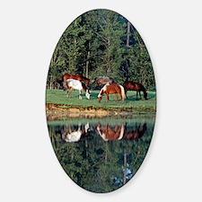 reflection_lgp Sticker (Oval)
