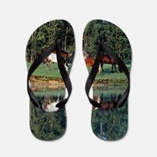 reflection_lgp Flip Flops