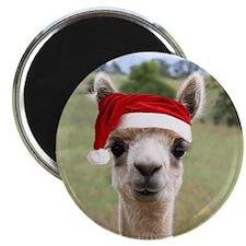 Sheba Alpaca at Christmas Magnet