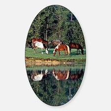 reflection_441 Sticker (Oval)