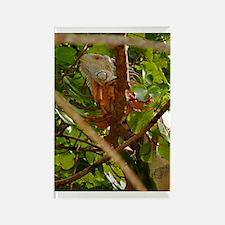 Hidden Iguana Rectangle Magnet