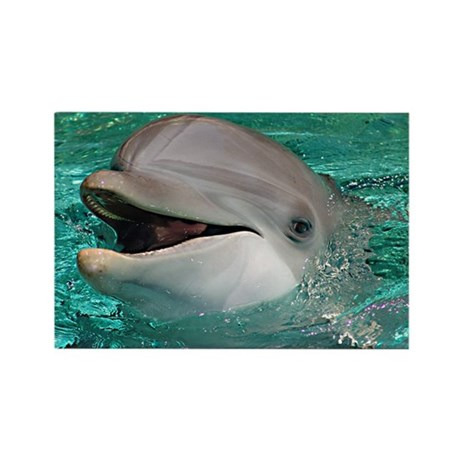 Friendly Dolphin Rectangle Magnet