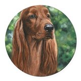 Irish setter Car Magnets
