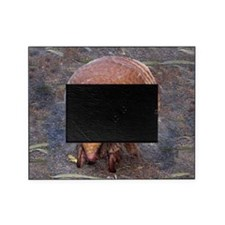 ArmadilloMouse Picture Frame