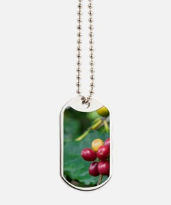 Coffee berries grow on a coffee plant on  Dog Tags