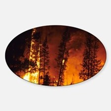 A wildfire in the Boise National Fo Sticker (Oval)