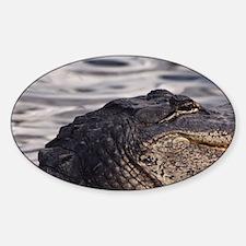 American Alligator (Alligator missi Sticker (Oval)