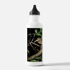 Green Heron, Everglade Water Bottle