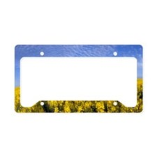 ID, Grangeville, Field of Can License Plate Holder