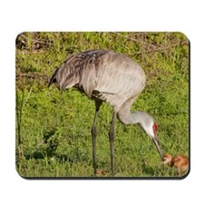 Sandhill Crane (Grus canadensis) with ch Mousepad