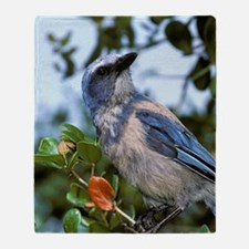 Scrub Jay, Aphelocoma coerulescens,  Throw Blanket